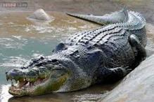 A 12 feet crocodile stunned onlookers when it grabbed its keeper by the hand and pulled him into water at an Australian zoo
