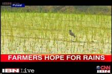 Haryana: Deficient rainfall causes damage to standing crop, farmers worried