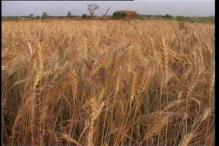 MP asks Centre to review order on bonus price for foodgrains