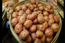 Potato futures rise 2.97 pc on tight supplies, rising demand