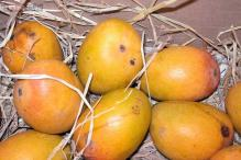 Tasted seedless grapes? Indian scientists have now developed seedless mangoes!