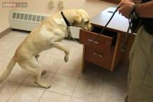This golden Labrador can sniff out pornographic material and is helping the police smoke out paedophiles