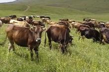 6 injured in clash between two communities over cattle breeding