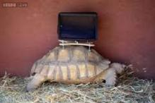 Tortoises wearing iPads in a controversial art exhibit have been removed after a vet's request