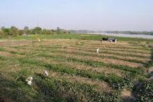 Allocate domestic natural gas to make fertiliser: FAI