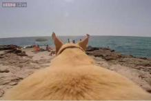 Watch: This Labrador just can't wait to go swimming! Walter ran miles with a GoPro camera fixed on his back just because he loves the sea