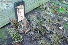 Watch: Have you seen FrogTV? This group of frogs can't resist watching a video of worms on an iPhone!