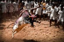 Buffalo races, martial art, and rural Olympics: 11 traditional sports played in India that you probably knew nothing about