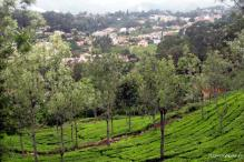 Assam set up panel to probe tea garden work conditions