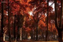 Photos: Saffron flowers, Chinar leaves, and the 'garden of breezes': 17 mesmerising photos of the fall season in Kashmir