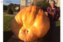 Man grows pumpkins that weigh hundreds of pounds in a backyard pumpkin patch; produces seven pumpkins weighing over 7,000 pounds!