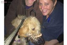 Every dog has its day: Labradoodle survives a fall off 200-foot cliff!