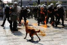 Sausage, the 'protest dog' from Greece who always showed up at anti-austerity protests, dies of a heart attack