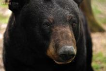 New Jersey: Indian-origin hiker snapped photos of bear that killed him