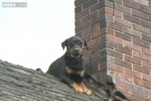 Ohio firefighters and police officers rescue dog that got out of attic and was stuck on roof for 3 days