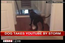 Watch: Dog Queso moonwalks to overcome his fear of doors
