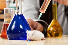 Scientists succeed in turning mice transparent