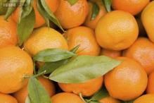 81-year-old charged with picking 11 truckloads of tangerines, selling stolen fruit at market