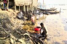 India on alert after massive oil spill in Sunderbans