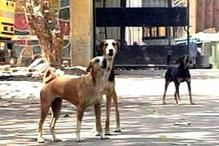 Delhi: Police rescue 26 stray dogs from Vasant Kunj house