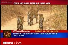 India has 2,226 tigers now, population grows by 30% in past three years