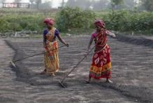 Union Budget 2015 may back off fertiliser subsidy reform
