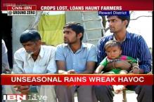 Haryana: Farmers in Rewari wait for government's help as crops worth lakhs destroyed