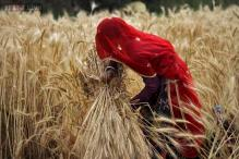 Wheat output prospects in 2015 could fall by 4-5 per cent: Radha Mohan Singh