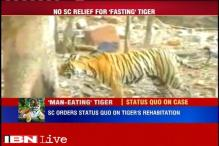 Tiger, who has allegedly turned into a man-eater, will stay at rescue centre in Udaipur: SC