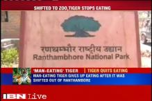 Tiger stops eating after it is shifted out of Ranthambore Tiger Reserve