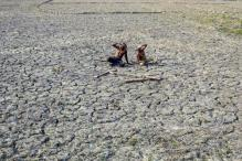Water Resources Dry Up for Telangana Farmers, Price Rise Likely