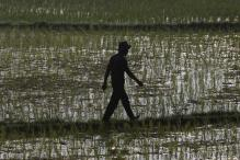 India's annual farm output down, fears of drought in 2015