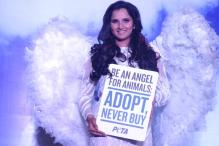 Sania Mirza urges you to adopt from animal shelters instead of buying pets