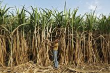 India gives loans to sugar mills to help clear $3.3 billion owed to farmers