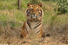 SC rejects plea against shifting of a tiger from Ranthambore National Park to Udaipur zoo