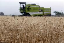 India may not import more wheat due to high global prices