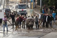 All lions, tigers accounted for in Tbilisi zoo flooding