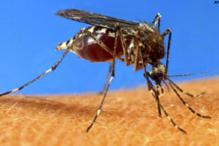 Indian scientists develop breakthrough dengue drug
