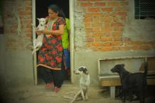 This little piece of Earth is India's first home for disabled dogs