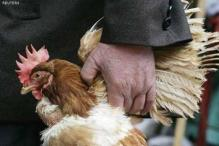 British authorities confirm outbreak of bird flu, say risk to public health very low