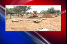 3000 cows dead as heavy rains hit Gujarat