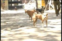 Mohanlal calls for need to urgently end stray dog menace