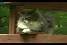 Watch: Earl Grey, a cat, fighting Canadian PM elections