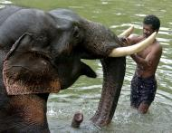 IFS officer couple booked for torturing poaching-accused in Kerala