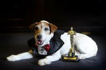 Uggie, the dog in 'The Artist', put down