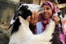 This Bakr Eid, pick 'beautiful, honest, or organic-fed' goats online