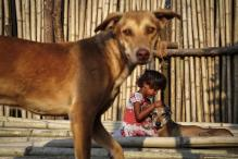 News Digest: Stray dogs are terror threat to Delhi airport, says DIAL