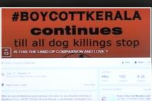 Animal right activists call for boycott of Kerala tourism against dog culling