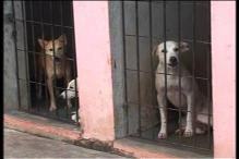 Kerala government could have handled stray dogs issue better: Animal Rights activists