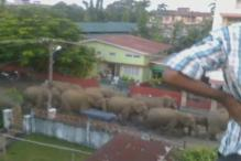 Watch: Narrow escape for bike riders as elephant tried to mow them down